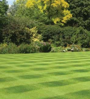 IDEAL QUALITY LAWN