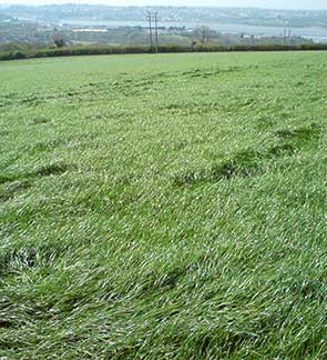 placeholder-cut-graze